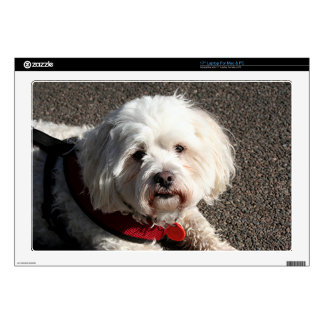 "Cute bichon frise dog skin for 17"" laptop"