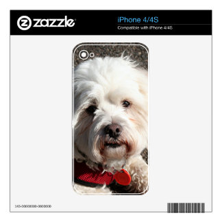 Cute bichon frise dog skins for the iPhone 4