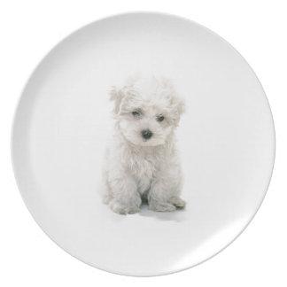 Cute Bichon Frise Plate