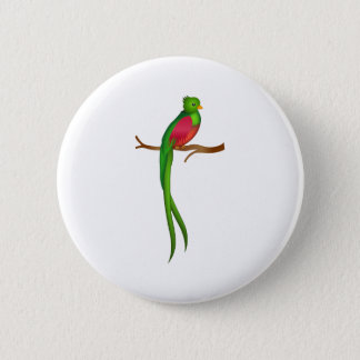 Cute bird Quetzal Pinback Button
