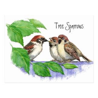 Cute Bird, Sparrow Family Postcards
