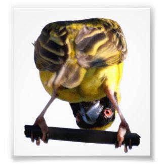 Cute Birdie Photograph (Satin)