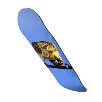 Cute Birdie Skateboarding Deck