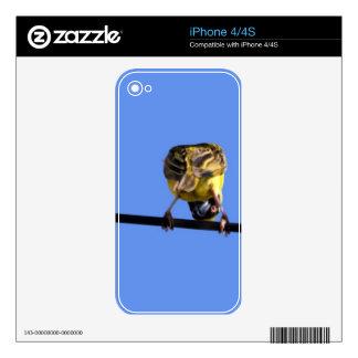 Cute Birdie Skins iPhone 4S Decals