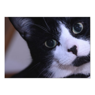 Cute Black and White Cat Face Card