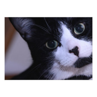 Cute Black and White Cat Face Personalized Announcements