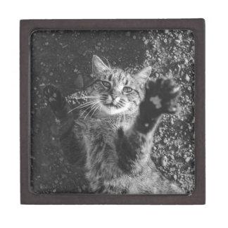Cute Black and White Cat Hug Jewelry Box