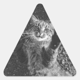 Cute Black and White Cat Hug Triangle Sticker