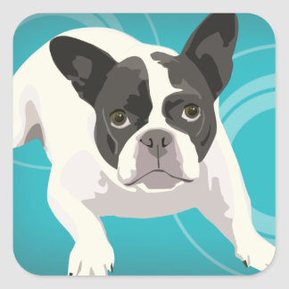 Cute Black and White French Bulldog on Blue Back Sticker
