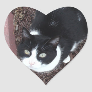 Cute Black and White Green Eyed Cat Stickers