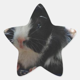 Cute Black and White Guinea Pig Star Sticker