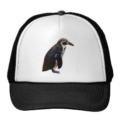 Cute Black And White Humboldt Penguin Hat at Zazzle