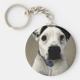 Cute black and White Pit Bull Terrier Keychain