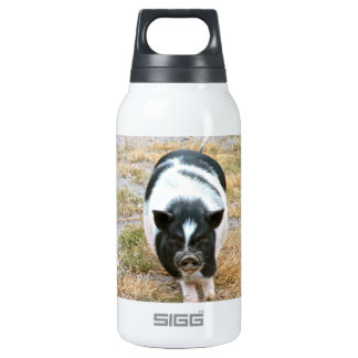 Cute Black and White Potbelly Pig Photo Insulated Water Bottle