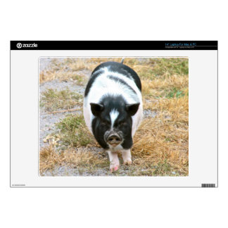 """Cute Black and White Potbelly Pig Photo 14"""" Laptop Skin"""