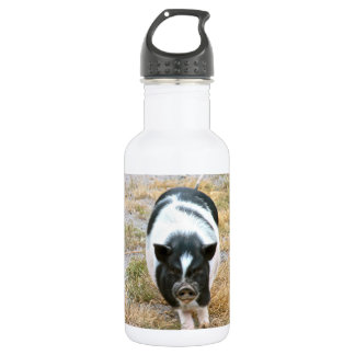 Cute Black and White Potbelly Pig Photo Water Bottle