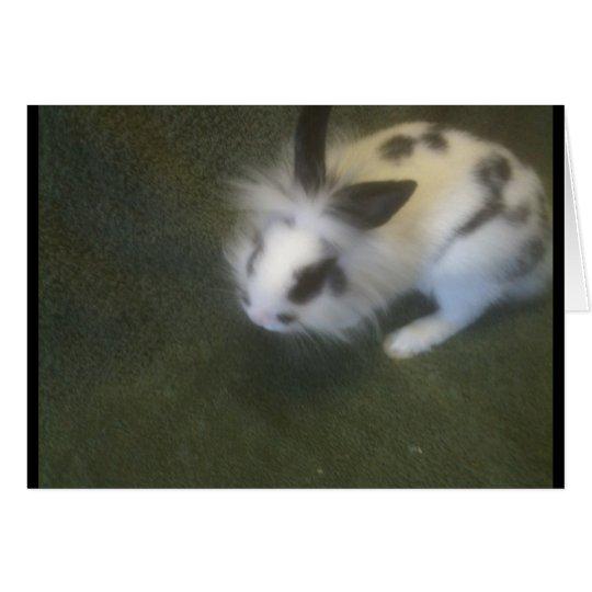cute black and white rabbit card