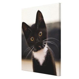 Cute Black And White Tuxedo Kitten Canvas Print