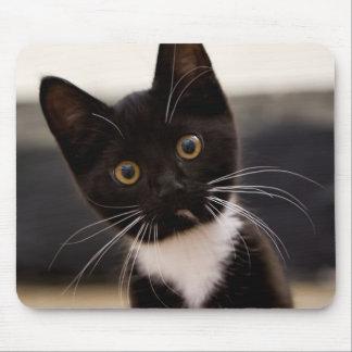 Cute Black And White Tuxedo Kitten Mouse Pad
