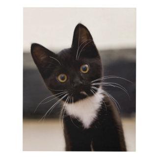 Cute Black And White Tuxedo Kitten Panel Wall Art