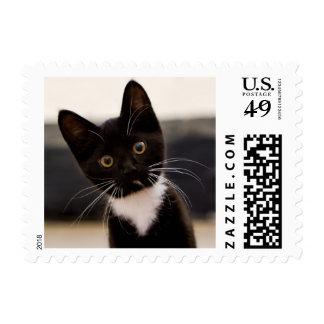 Cute Black And White Tuxedo Kitten Postage
