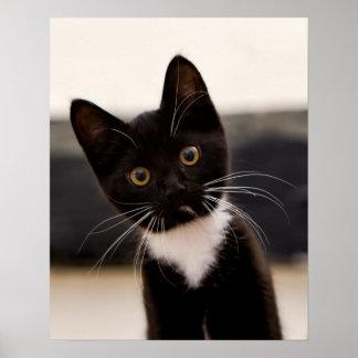 Cute Black And White Tuxedo Kitten Poster