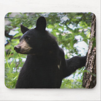 Cute Black Bear Cub Climbing On The Tree In Forest Mousepad