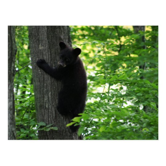 Cute Black Bear Cub Climbing On The Tree In Forest Postcard