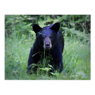 Cute Black Bear Cub Running In Green Grass Postcard