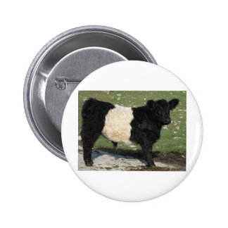 Cute Black Belted Galloway Calf 2 Inch Round Button