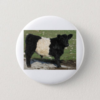 Cute Black Belted Galloway Calf Button