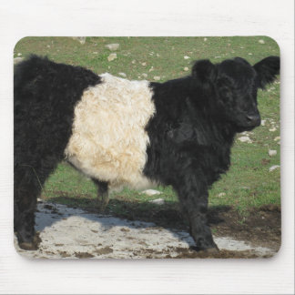 Cute Black Belted Galloway Calf Mouse Pad