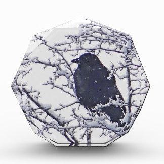 Cute black bird in snowy branches award