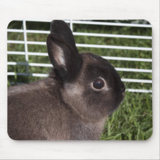 Cute black bunny on green grasses mouse pad