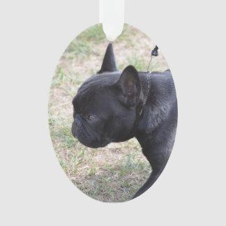 Cute Black French Bulldog