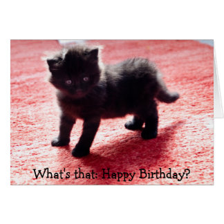 Cute black kitten - funny birthday card