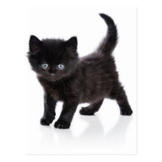 cute black kitten postcard