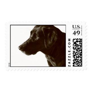 Cute Black Lab Postage Stamps