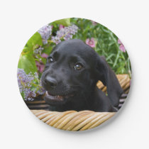 Cute Black Labrador Retriever Dog Puppy Pet Photo Paper Plate