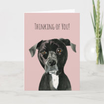 Cute Black Pit Bull Dog Face   Thinking of You Card