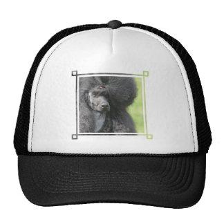 Cute Black Poodle Hat