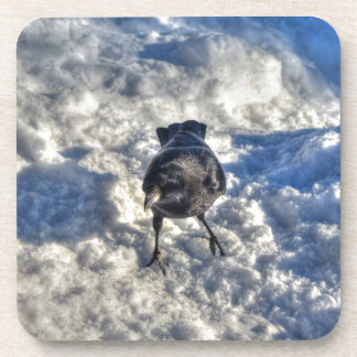 Cute Black Raven in the Snow Photo Beverage Coaster