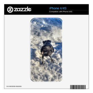 Cute Black Raven in the Snow Photo Decals For The iPhone 4S