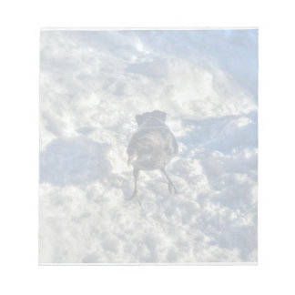 Cute Black Raven in the Snow Photo Notepad