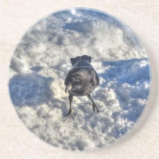 Cute Black Raven in the Snow Photo Sandstone Coaster