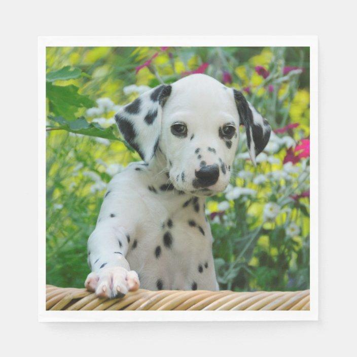 Cute Black Spotted Dalmatian Baby Dog Puppy Photo Napkins Zazzle Com