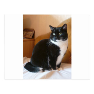 Cute black & white cat on bed postcard