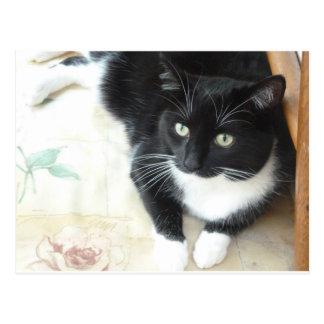 Cute black & white cat postcard