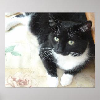 Cute black & white cat poster