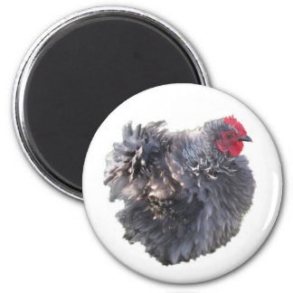 Cute Blue Frizzle Cochin Banty Rooster Fridge Magnets